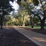 Alma park track